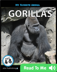 My Favorite Animal: Gorillas