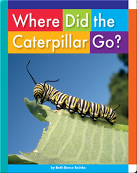 Where Did the Caterpillar Go?