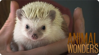 Meet & Greet: Prickle the Hedgehog