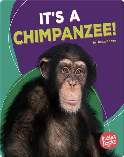 It's a Chimpanzee!