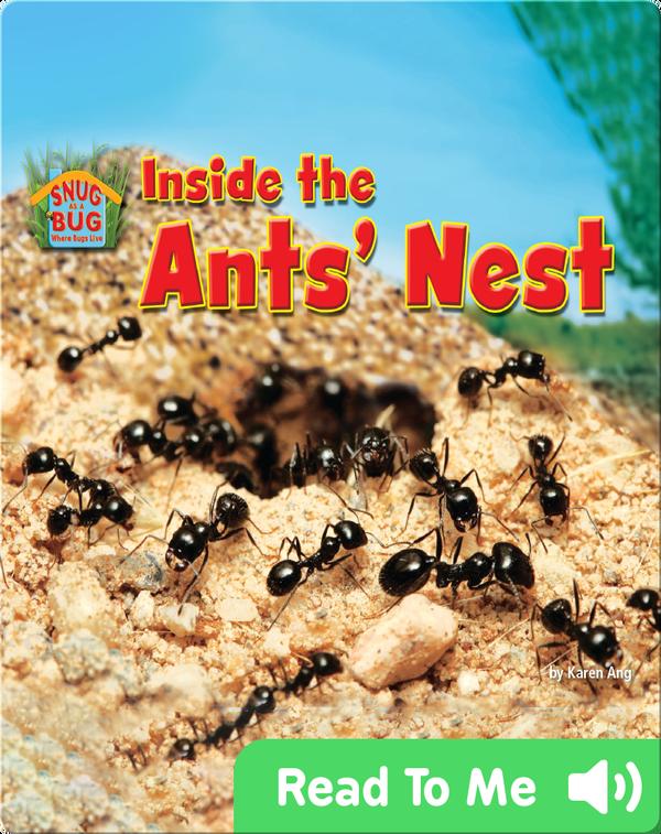 Inside the Ants' Nest