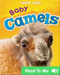 Super Cute! Baby Camels