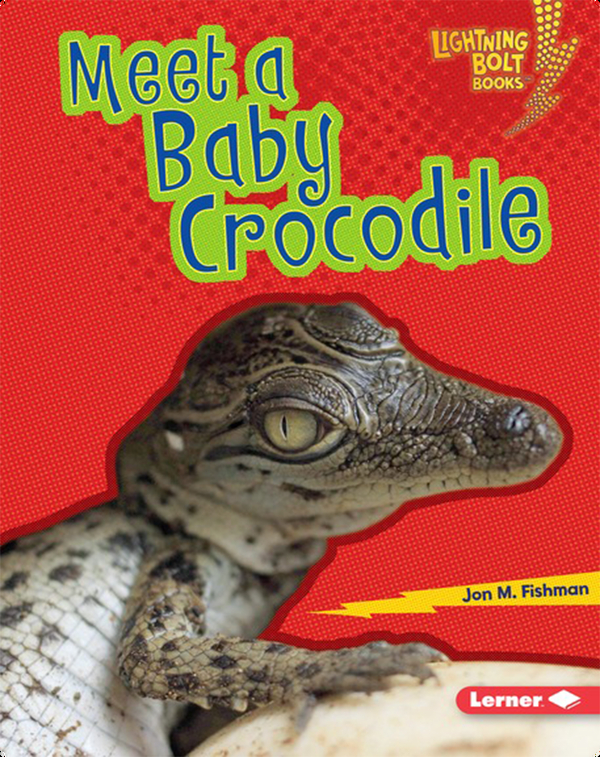 Meet a Baby Crocodile