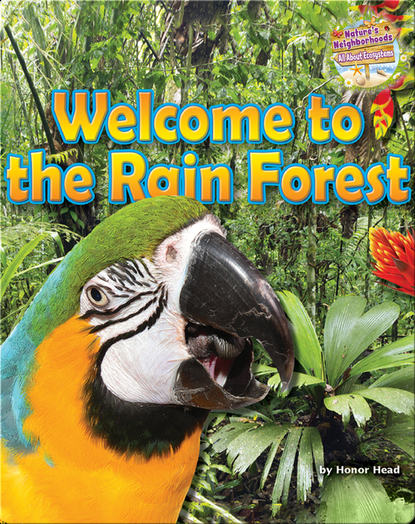 Welcome to the Rain Forest
