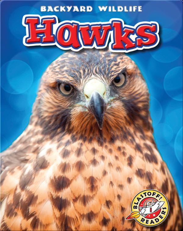 Backyard Wildlife: Hawks