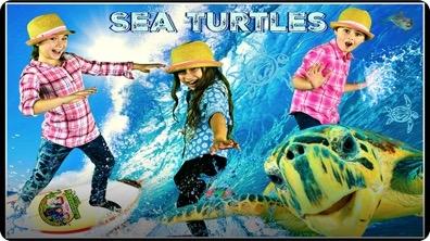 Sea Turtle Adventure! All About Sea Turtles!