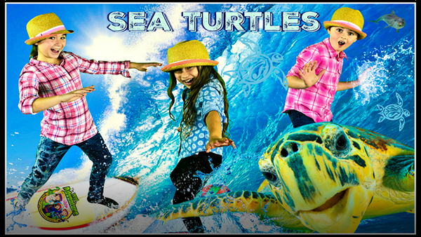 Sea Turtle Adventure! All About Sea Turtles!