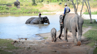 Gabby Wild: What's a Mahout?