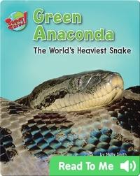 Green Anaconda: The World's Heaviest Snake