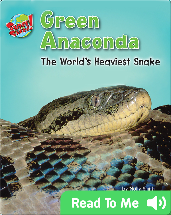 Green Anaconda: The World's Heaviest Snake