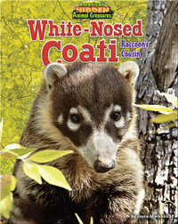 White-Nosed Coati: Raccoon's Cousin
