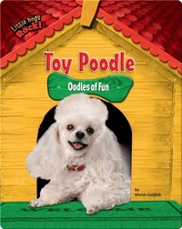 Toy Poodle: Oodles of Fun