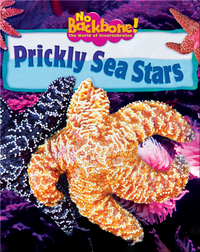 Prickly Sea Stars