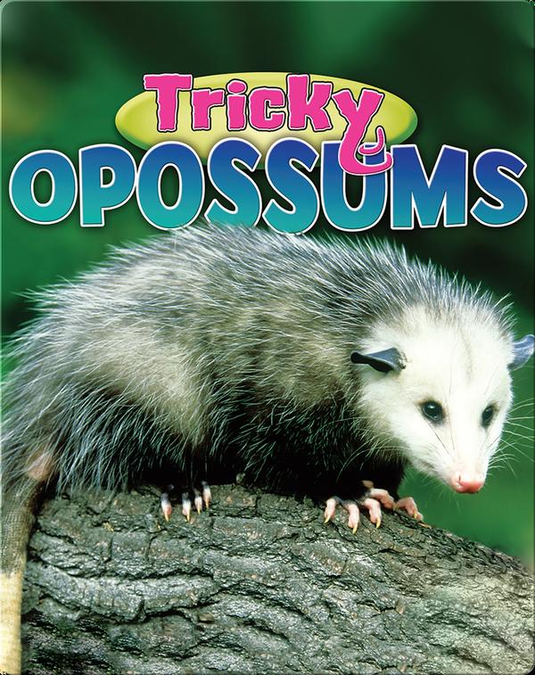Tricky Opossums