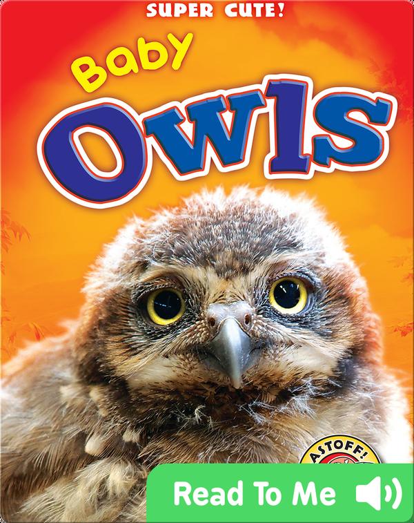 Super Cute! Baby Owls