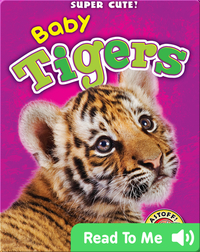 Super Cute! Baby Tigers