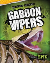 Gaboon Vipers