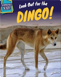 Look Out for the Dingo!