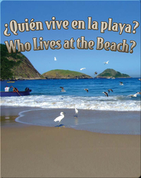 Quien Vive En La Playa?  (Who Lives At The Beach?)