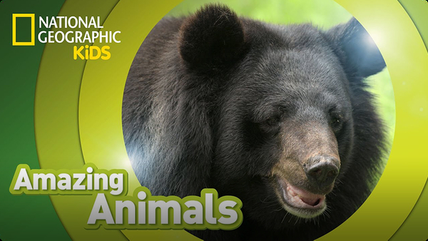 Amazing Animals: Sloth Bear