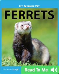My Favorite Pet: Ferrets
