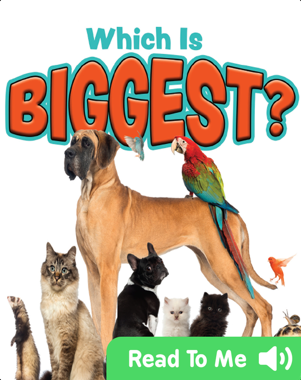 Which is Biggest?