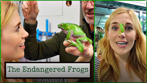 FROG ON MY FACE?! Maddie Meets the Endangered Frogs