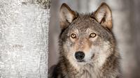 The 'Alpha Dog' Is a Myth