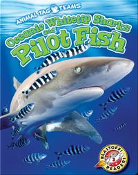 Oceanic Whitetip Sharks and Pilot Fish