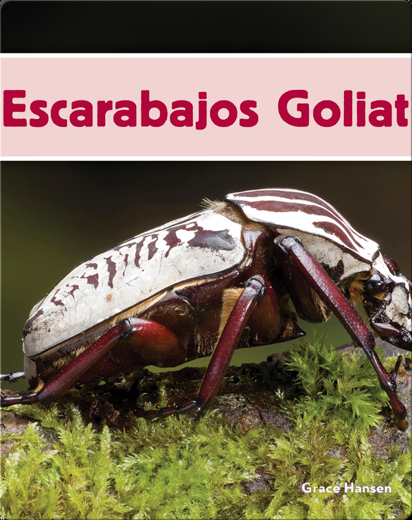 Escarabajos Goliat
