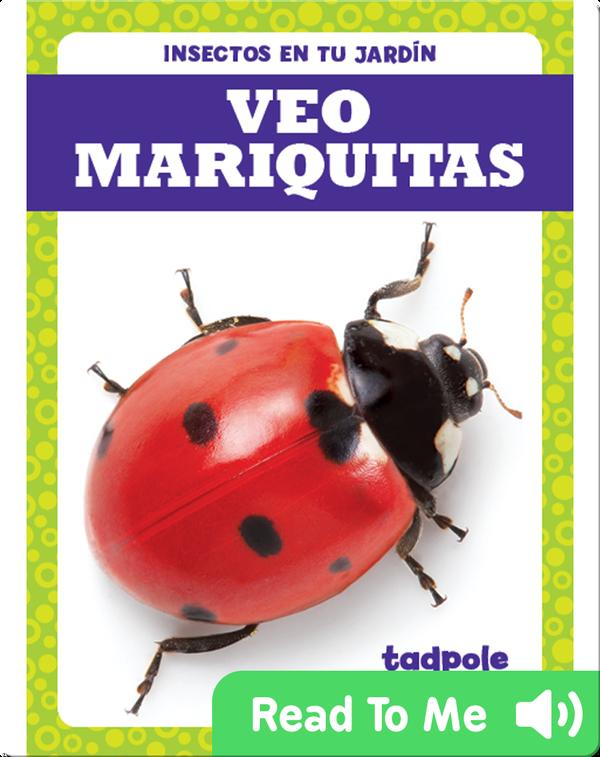 Veo mariquitas (I See Ladybugs)