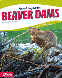 Animal Engineers: Beaver Dams