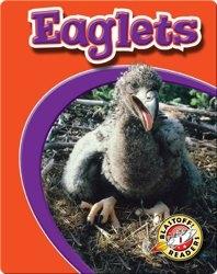 Eaglets: Watch Animals Grow