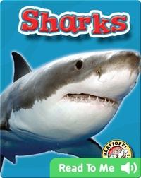 Sharks: Oceans Alive