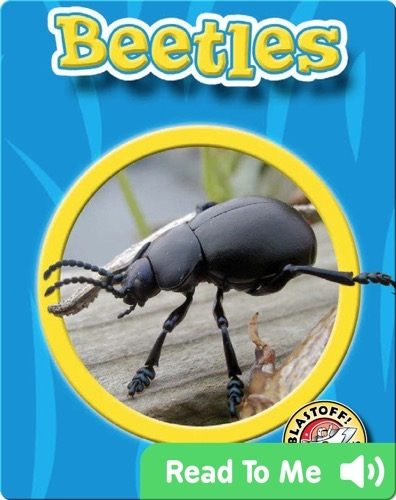Beetles: World of Insects