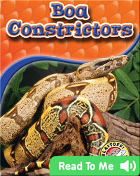 Boa Constrictors: Snakes Alive