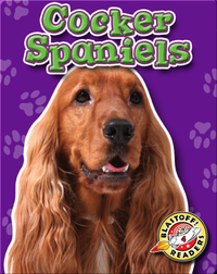 Cocker Spaniels: Dog Breeds