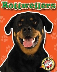 Rottweilers: Dog Breeds