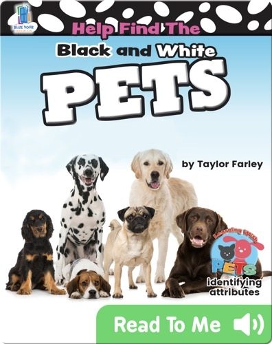 Help Find the Black and White Pets