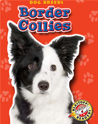 Border Collies: Dog Breeds