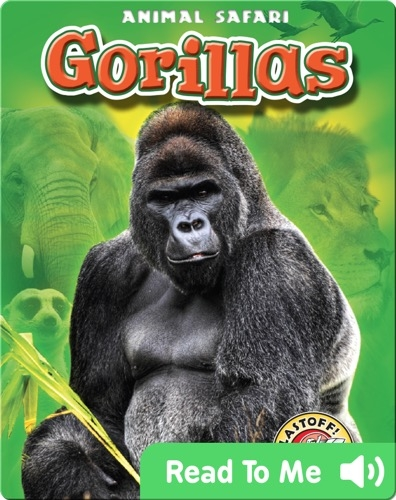 Gorillas: Animal Safari