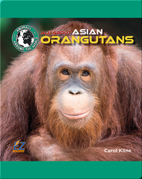 All About Asian Orangutans