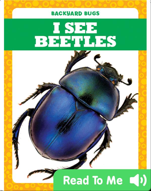 I See Beetles