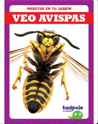 Insectos en tu jardín: Veo avispas
