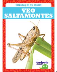 Insectos en tu jardín: Veo saltamontes