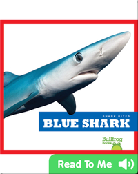 Shark Bites: Blue Shark