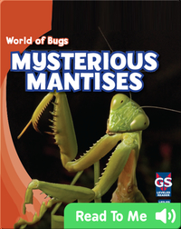 Mysterious Mantises