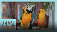 Bird Training Session! | Macaw, Parakeet