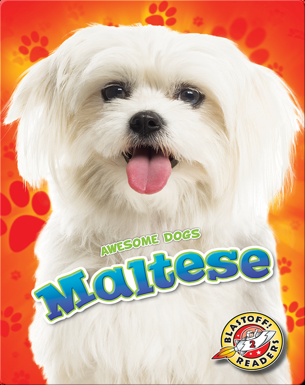 Awesome Dogs: Maltese