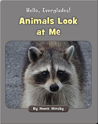 Hello, Everglades!: Animals Look at Me